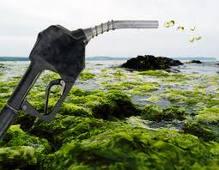 Biocombustible pompe